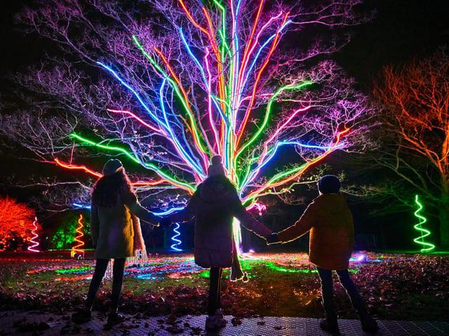 Neon Tree. Photo by Richard Haughton