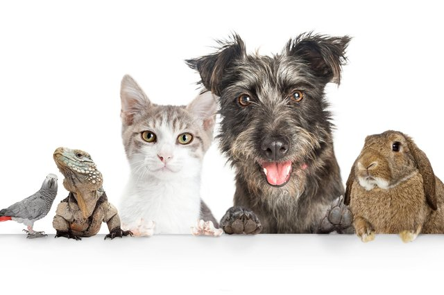 Did your pet make the shortlist in our Top Pet competition?