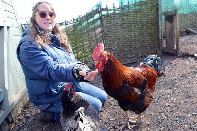 Infuriated allotment-holder Ceri Collen-Boot with her beloved cockerel at Whinney Lane in Mansfield Woodhouse.