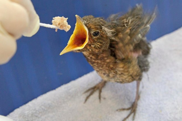A rescued baby bird.