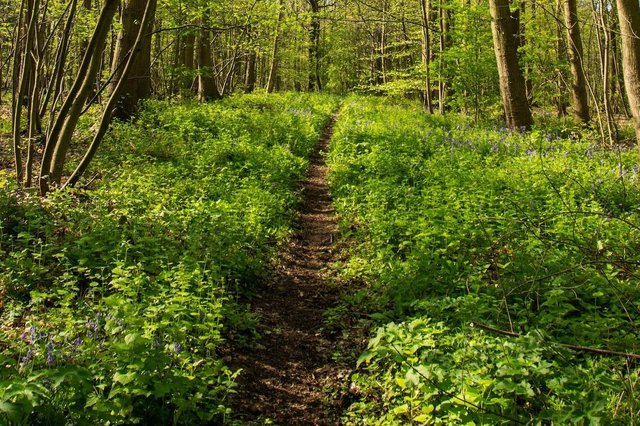 Sherwood Forest in the spring
