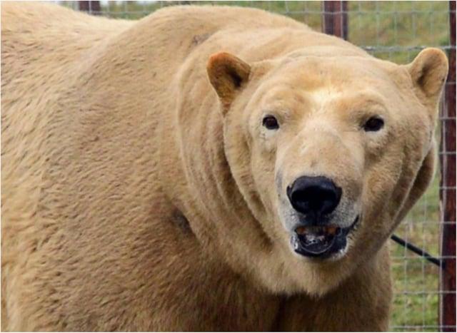 Yorkshire Wildlife Park is still open.