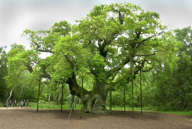The protest is planned to take place outside The Major Oak in Sherwood Forest