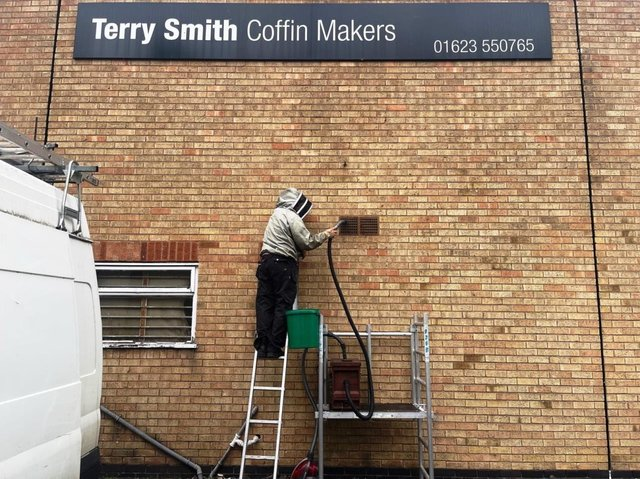 The nest of honey bees being taken from a wall outside of Terry Smiths coffin factory, in Nottingham.